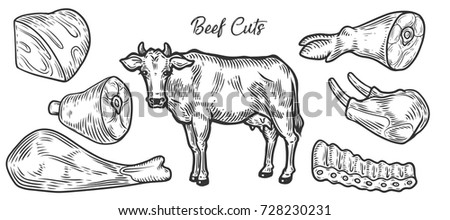 Beef Cow Meat Cuts Parts Chop Hand Drawn Butchery Vector Set Engraved