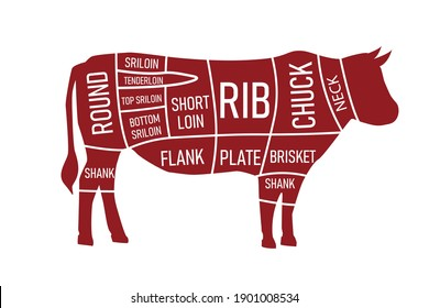 Beef parts of the cow isolated on wite background. red beef meat cuts.