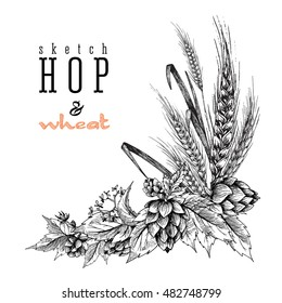 Beer hops branch vector illustrations isolated with wheat ears. Sketch and engraving design frame. All element isolated.