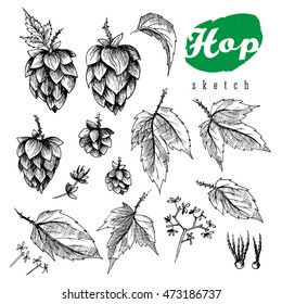 Beer hops element design, hand drawn cones, leaves and seeds, black and white sketch illustration collection.
