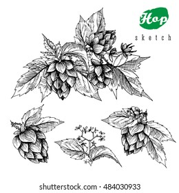 Beer hops set of 4 hand drawn branches with leaves, cones and  flowers, black and white, sketch and engraving design. All element isolated.