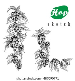 Beer hops set of vertical border hand drawn branches with leaves, cones and flowers, black and white, sketch and engraving design plant. All element isolated.