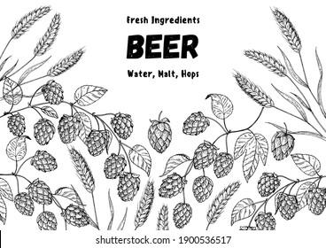 Beer ingredients vector illustration. Vintage design. Brewery design template. Beer hop illustration. Hand drawn sketch design.