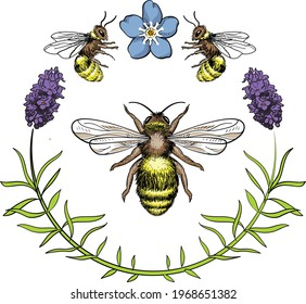 Bees hand drawing vector with lavender and forget me not flower illustration
