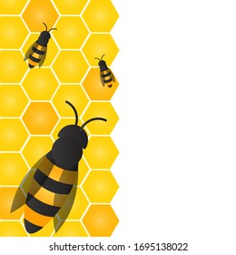 Bees, wasps and honeycombs with honey. Vector apiary and beekeeper template