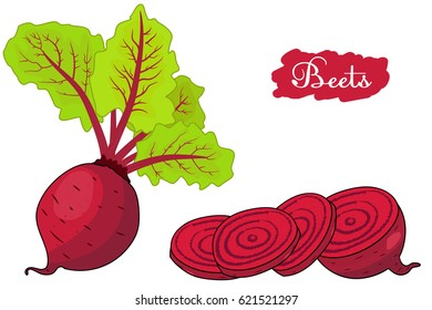 beet. beets with a bundle of leaves. pieces of beet. useful vegetables. vegetarianism. Vector illustration with white background. the drawing hands.