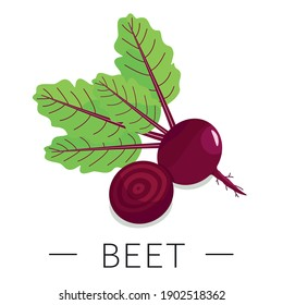 Beet root, half of beet roots, red beets with green leaves. Vector illustration