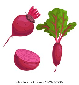 Beet roots set. Whole with green leaves, without leaves and half of beet. Red organic vegetablles. Vector illustrations isolated on white background.