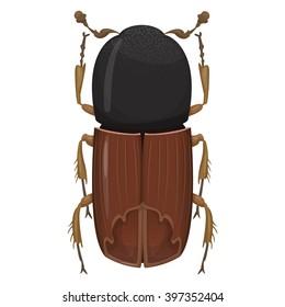 Beetle bark beetle. Naturalistic illustration on beetles