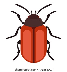 Beetle bug insect isolated on white background vector wildlife animal vector bug