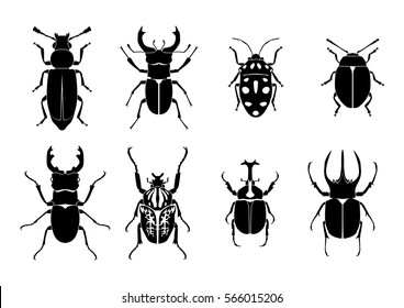beetle flat illustration, vector, Insect, bug, nature