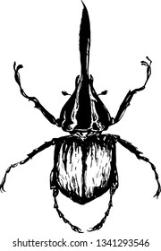 Beetle Hercules (Dynastes hercules). Vector illustration on white background. Insect,