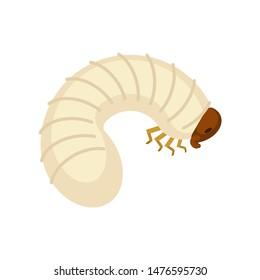 Beetle larva isolated. Bug caterpillar. Maggot vector illustration