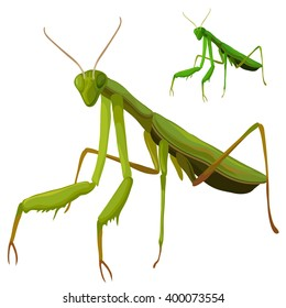 Beetle praying mantis isolated on a white background. Vector illustration.