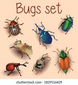 Beetle, set with beetles, Colorado potato beetle, bronze beetle, bug, weevil beetle