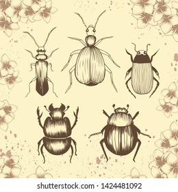 Beetles of different species. Bombardier beetle, scarab, water, ground and soldier beetles. Hand drawn vector illustration. Floral frame