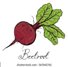 Beetroot With Leaves color, Vintage retro woodcut radish or beets, beet vegetable cartoon illustration..Beets, Beet, Beetroots