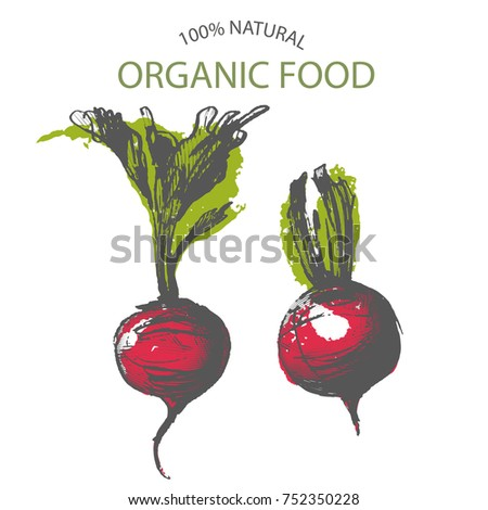 Beets Hand Draw Vector Stock Vector Royalty Free 752350228