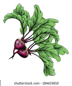 A beets vintage woodcut illustration in a vintage style