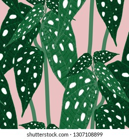 Begonia maculata wightii. Hand-drawn vector seamless pattern with unusual indoor plant for your design.