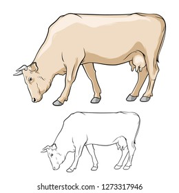 Beige Cow graze. Cow in lines. Cow on white background. Cow ore. Vector