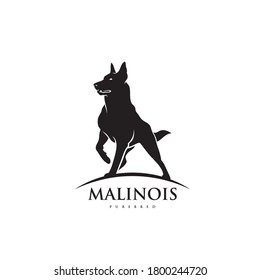 Belgian shepherd dog Malinois - isolated vector illustration