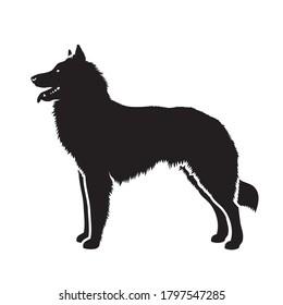 Belgian Shepherd Tervuren dog - isolated vector illustration