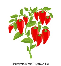 Bell pepper vegetable plant. Red ripe fruit harvest. Capsicum annuum. Vector Illustration.