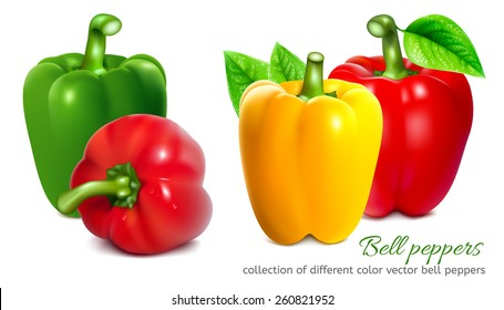 Bell peppers. Collection of different color bell pepper. Vector illustration.
