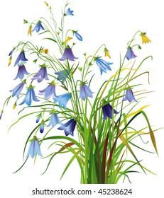 Bell-flowers