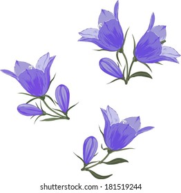 Bell-flowers (Campanula) - Hand drawn vector illustration of blue bell flowers and buds on white background.