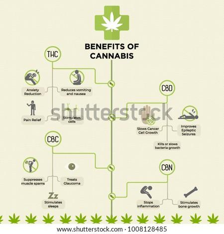 benefits cannabis infographic medical marijuana stock vector