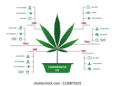 The benefits of healthy marijuana leaves