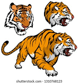 Bengal Tiger set suitable as logo for team mascot, royal tiger drawing sketch in full growth, Tiger Mascot Graphic, vector graphic to design