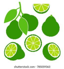 Bergamot set. Isolated bergamot on white background. EPS 10. Vector illustration