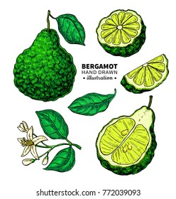 Bergamot vector drawing. Isolated  illustration of citrus fruit, slices, flower. Organic food. Essential oil colorful sketch Beauty, spa, cosmetic and tea ingredient Great for label, poster, packaging