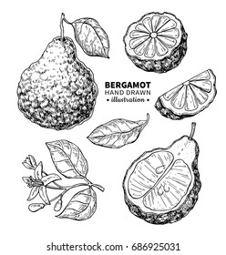 Bergamot vector drawing. Isolated vintage  illustration of citrus fruit, slices, flower. Organic food. essential oil engraved style sketch. Beauty and spa, cosmetic and tea ingredient