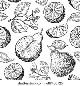 Bergamot vector seamless pattern drawing Isolated vintage background of citrus fruit with flower and slice Organic food Essential oil engraved style sketch. Beauty and spa, cosmetic and tea ingredient