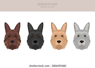 Berger picard clipart. Different coat colors and poses set.  Vector illustration