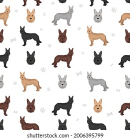 Berger picard seamless pattern. Different coat colors and poses set.  Vector illustration