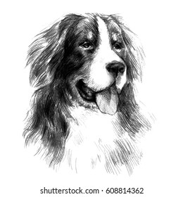 Bernese Mountain Dog. Graphic portrait dog, hand drawing illustration. Vector isolated on a white background. Drawn in pencil and image trace. Drawing in realistic style. Fluffy and friendly dog.