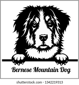 Bernese Mountain Dog - Peeking Dogs - breed face head isolated on white - vector stock
