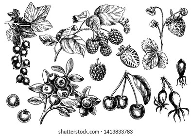Berries big set. Realistic strawberries, cherries, raspberries, blackberries, currants, dogrose, blueberries  isolated on white background. Hand drawing. Vintage. Black and white. Vector.