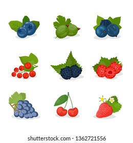 Berries and fruit vector illustrations set. Strawberry, blueberry, cherry, grape, gooseberry, black and red currant, blackberry and raspberry with leaves. Summer seasonal harvest.