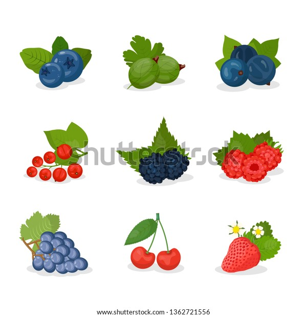 ベリーとフルーツベクターイラストセット イチゴ ブルーベリー 桜 ブドウ グーズベリー 黒と赤のカラス ブラックベリー ラズベリーと葉 夏季の収穫 のベクター画像素材 ロイヤリティフリー