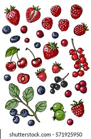 Berries and leaves. Wild berries painted line on a white background. Cranberry, cranberries, currants, raspberries, strawberries, blueberries