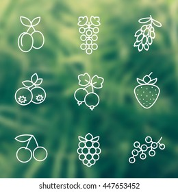 Berries line icons set, raspberry, blueberry, cherry, grape, strawberry, barberry, plums, vector illustration