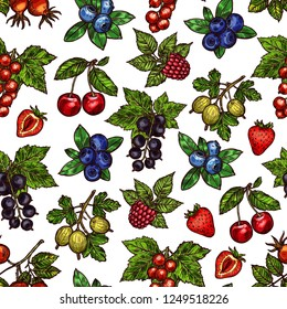 Berries on branch or stem sketches in seamless pattern. Dogrose and blackberry, red or black currant, blueberry and raspberry, cherry and strawberry, gooseberry. Natural food in endless texture vector