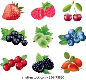 berries photo-realistic vector set