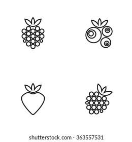 Berries. Raspberry, blueberry, strawberry, blackberry. Vector illustration